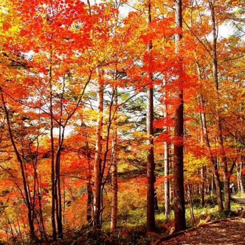 秋の蓼科を満喫♪
