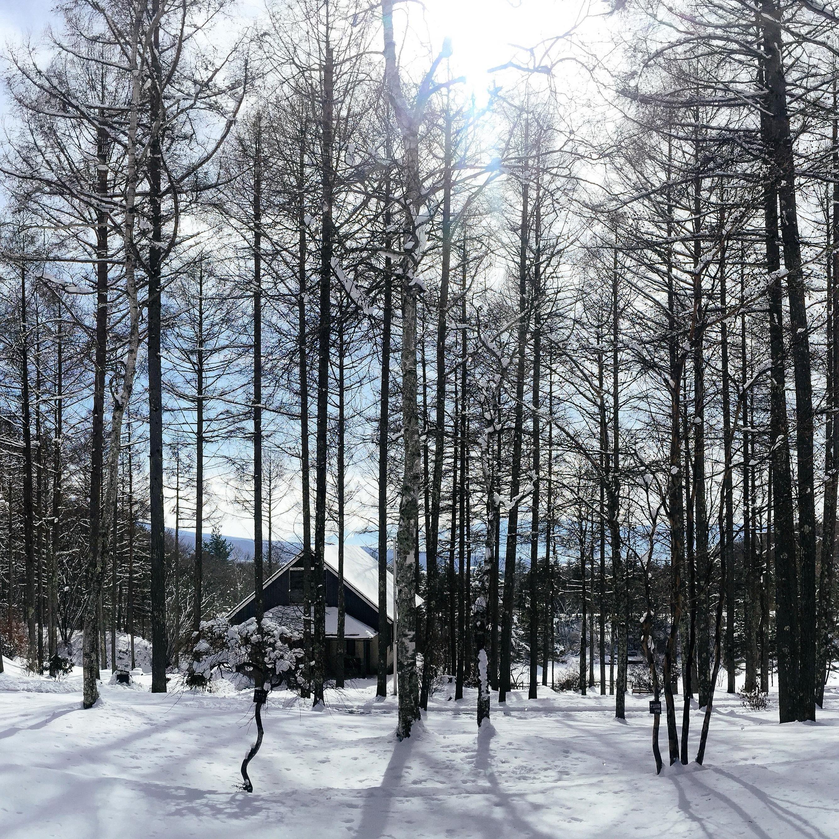 雪解けの晴れの日