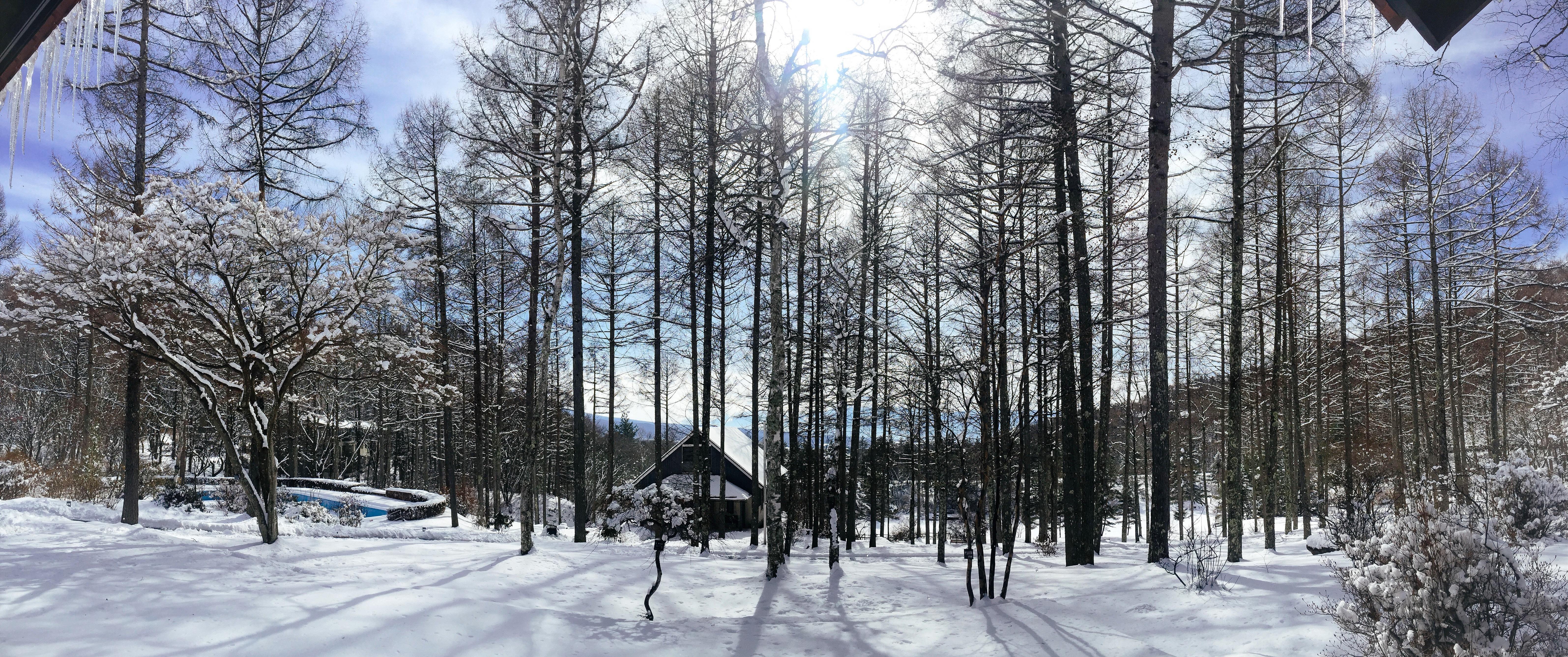 Azeria_exterior_Winter.jpg
