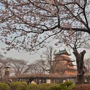 高島城公園の桜 開花
