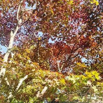 秋の空気感