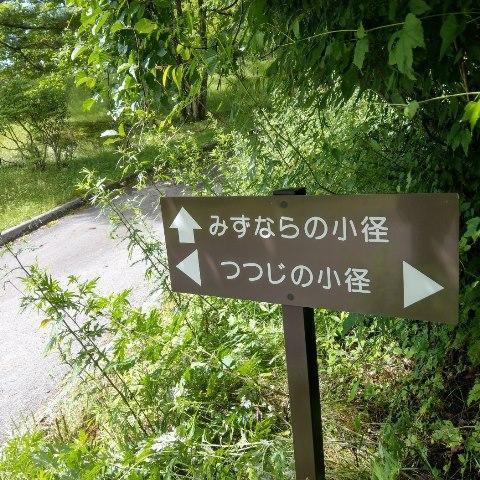 【深緑あふれる小径のご案内】