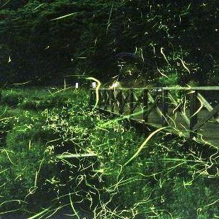 【イベント6月】辰野「ホタルの里」観賞イベント&車山高原レンゲツツジ観賞無料送迎バス