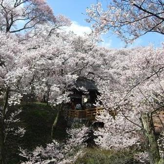 【ご予約はお早めに】高遠城址公園お花見散策イベント